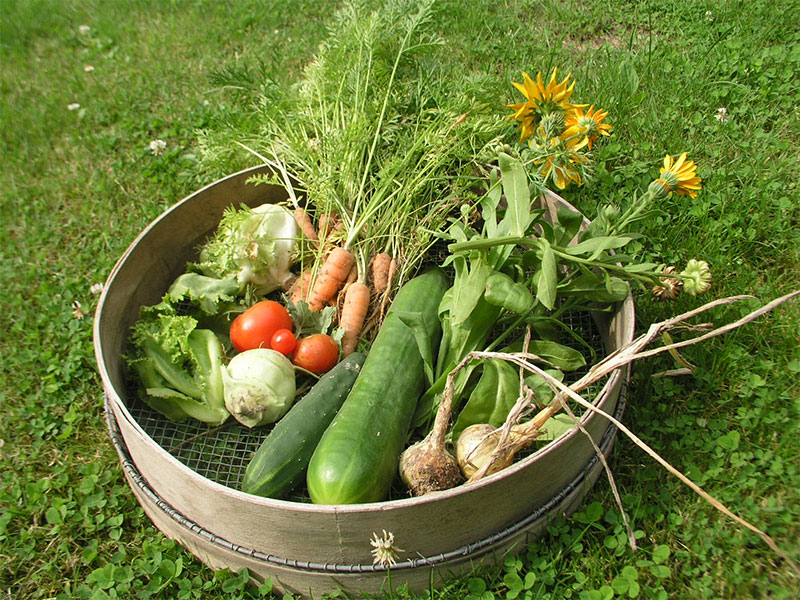 Schüssel mit selbst geerntetem Gemüse